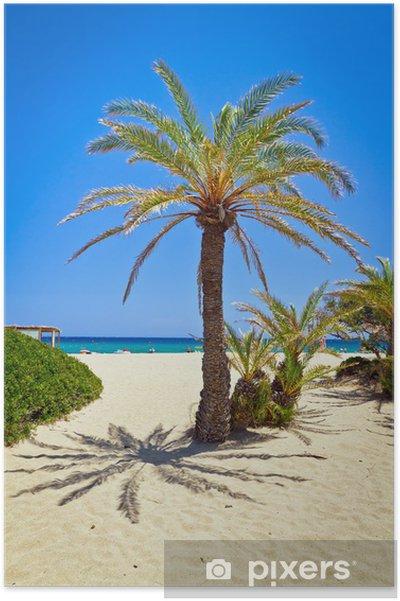 Plakat Data Cretan palmy na idyllicznej Vai Beach, Grecja - Europa