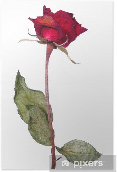 Plakat Dead róża - Kwiaty