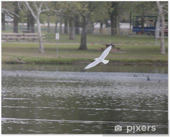 Plakat Delawarska - Ptaki