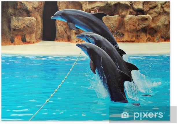 Plakat Delfiny skoków - Tematy