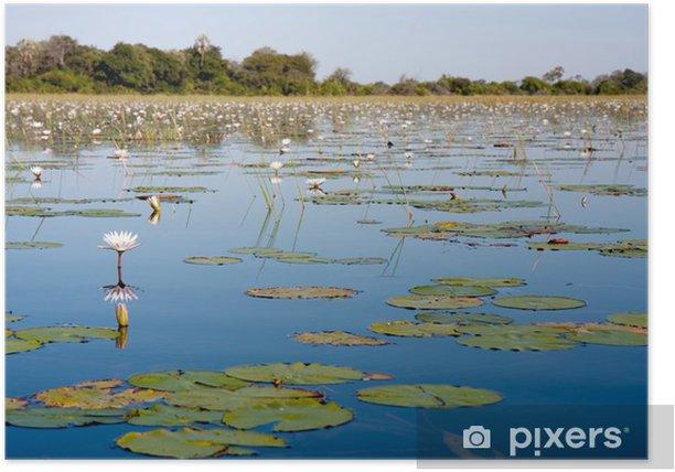 Plakat Delta Okawango w Botswanie - Kwiaty