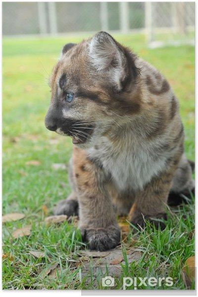 Plakát Dětská Puma - Savci