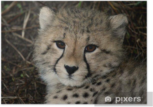 Plakát Dítě Cheetah portrét - Savci