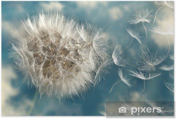 Plakat Dmuchawiec utraty nasion na wietrze - Tematy