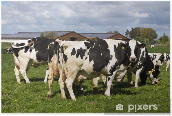 Plakat Dobrostan krów mlecznych - Tematy