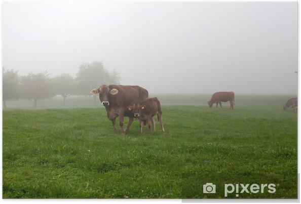 Plakát Dospělý a dítě kráva na poli na mlhavého rána - Venkov