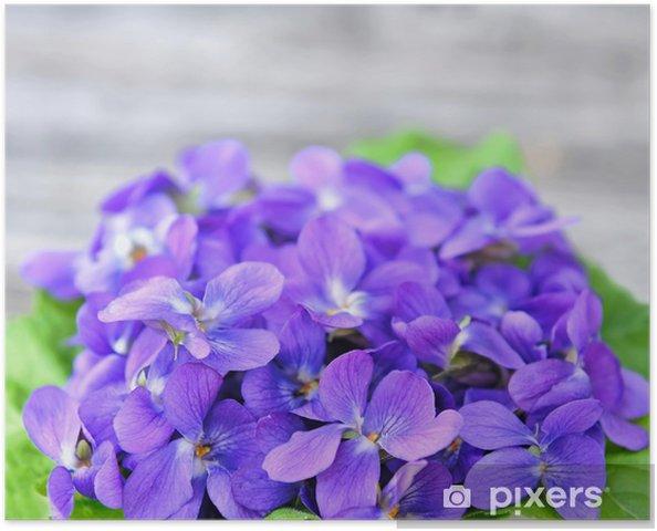 Plakát Dřevo fialky květiny (Viola odorata) - Květiny