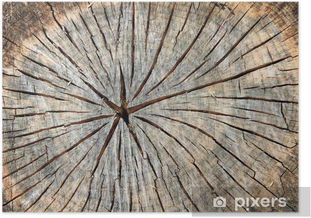 Plakat Drewniane tekstury - Cuda natury