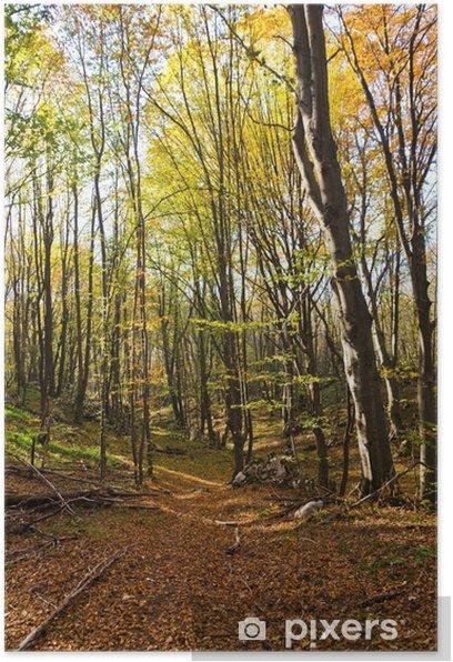 Plakat Droga przez las kolorowych drzew na słoneczny dzień jesieni - Pory roku