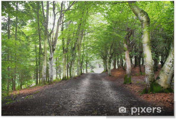 Plakat Droga w lesie - Lasy
