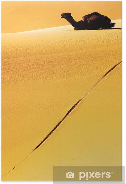 Plakat Dromader - Afryka