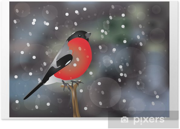 Plakát Druh ptáka - Ptáci