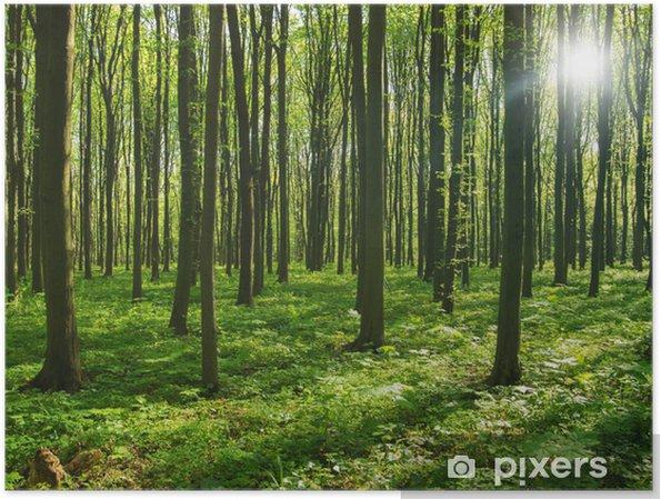 Plakat Drzew leśnych. zieleni drewno światło słoneczne tła. - Przeznaczenia