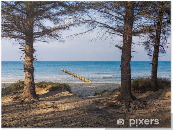 Plakat Drzewa na wybrzeżu Bałtyku. - Woda