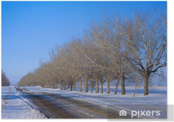 Plakat Drzewa w perspektywie wzdłuż drogi - Krajobraz wiejski