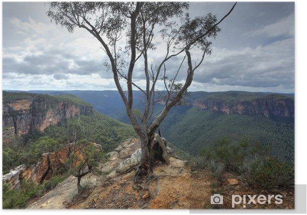 Plakat Drzewo gumy na cyplu z widokiem Grose burramoki v - Góry