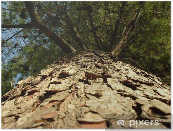 Plakat Drzewo widziane przez mrówki - Drzewa