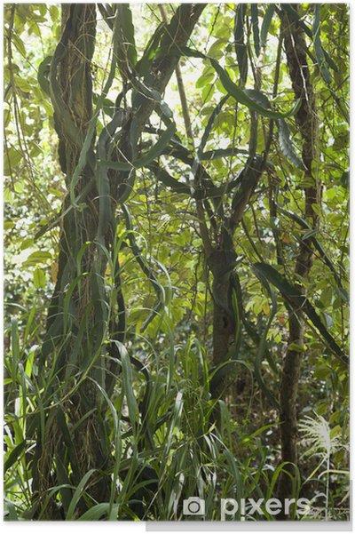 Plakat Drzewo z winorośli i trawy. - Drzewa