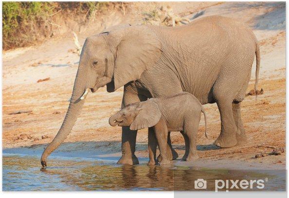 Plakat Duże stado słoni afrykańskich - Tematy