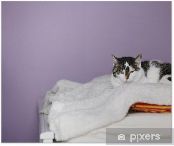 Plakat Duży Dom Kot Leży Na łóżku Pixers żyjemy By Zmieniać
