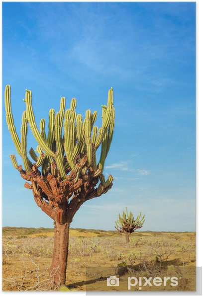 Plakát Dva kaktusy - Amerika