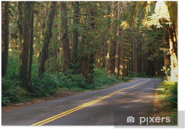 Plakát Dva Lane Road propluje Rainforest - Stromy