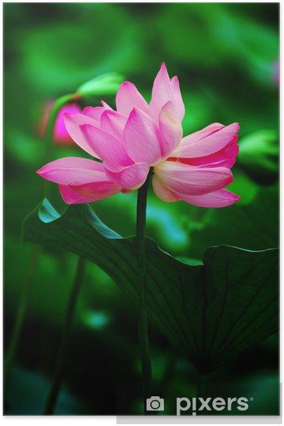 Plakát Dvojče lotosové květy na jednom stonku - Květiny