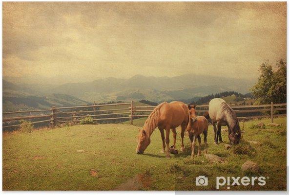 Plakat Dwa konie i źrebię na łące. tekstury papieru. - Zwierzęta