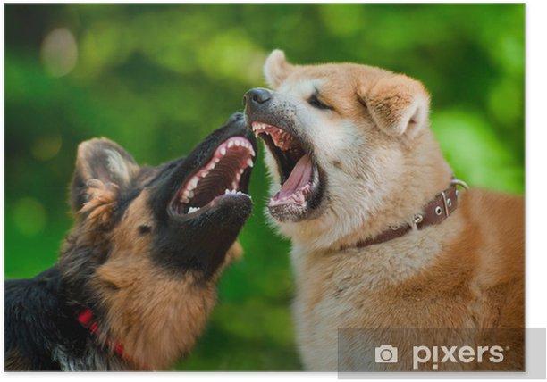 Plakat Dwa psy walki - Ssaki