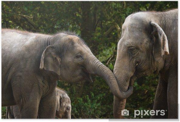 7c594ca4be1e11 Plakat Dwie kobiety azjatyckie słonie zabawy • Pixers® - Żyjemy by ...