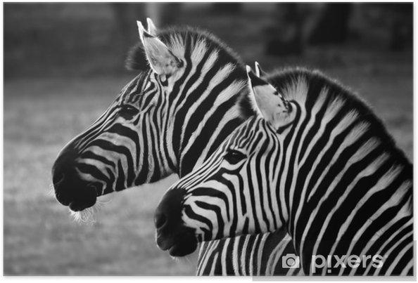 Plakat Dwie zebry - Tematy