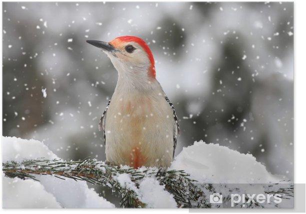 Plakat Dzięcioł w śniegu - Ptaki