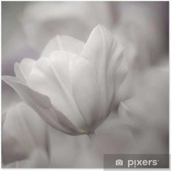 Plakat Dzieł sztuki o tematyce zbliżenie tulipany, rozmytymi i ostrych - Tematy