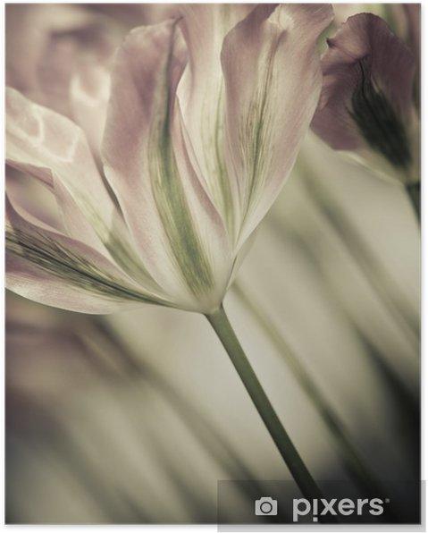 Plakat Dzieł sztuki o tematyce zbliżenie tulipany, rozmytymi i ostrych - Do salonu fryzjerskiego