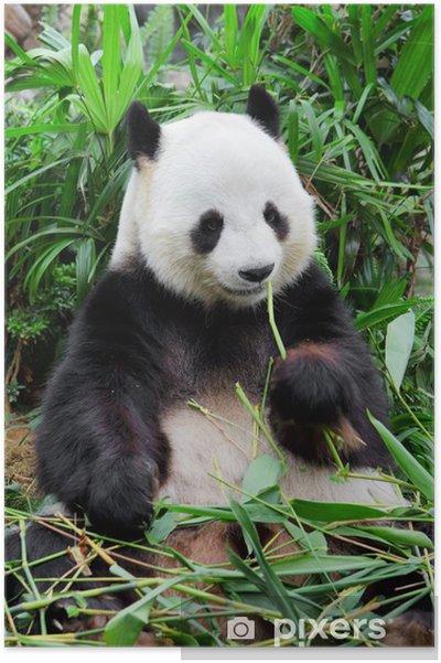 Plakat Dzika panda - iStaging