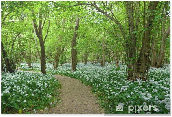 Plakat Dziki Czosnek Growing w Woodland - Rośliny