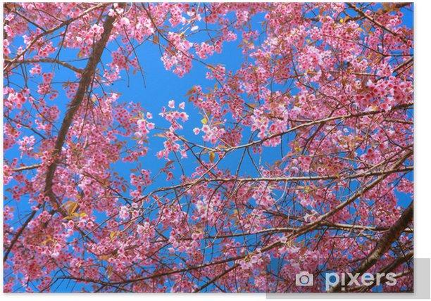 Plakat Dziki kwiat wiśni himalajski - Natura i dzicz