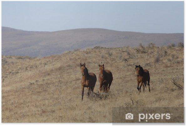 Plakat Dzikich koni stojących z dala od stada - Ssaki