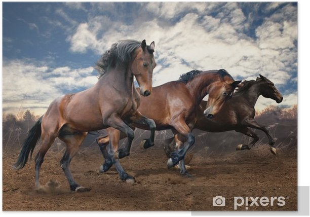 Plakat Dzikie konie laurowe skok - Tematy