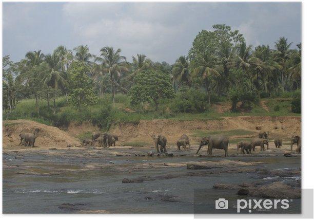 Plakat Dzikie słonie grające w dużych wody - Woda