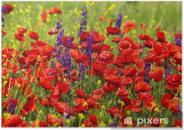 Plakat Dzikiej szałwii i maki - Kwiaty