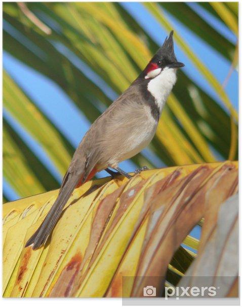 Plakat Dziwny ptak Mauritius - Afryka