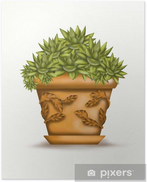 Plakat Echeveria w vaso - Dom i ogród