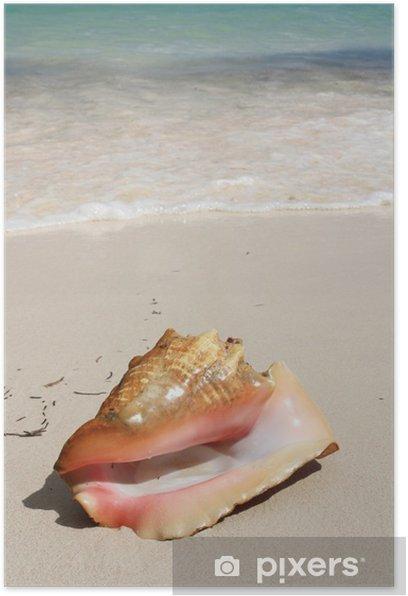 Plakat Egzotyczne muszla na plaży - Ameryka