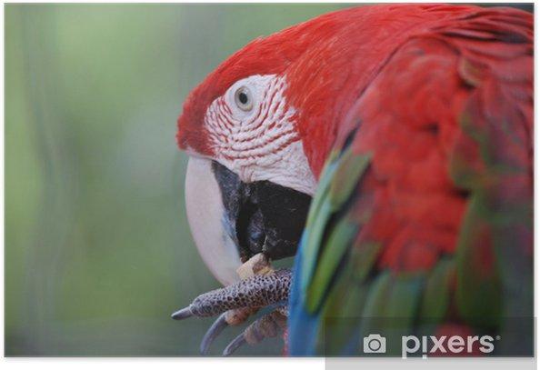 Plakat Egzotyczne ptaki - Tematy