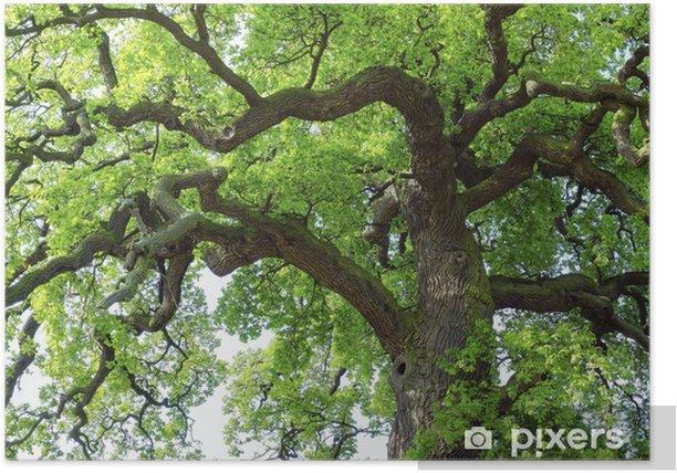 Plakat Eiche # 28 - Drzewa