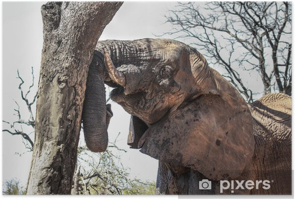 Plakát Elephant Portrait - Savci