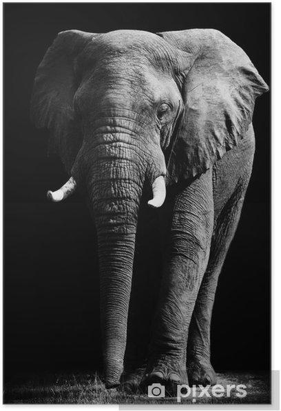 Plakat Elephant samodzielnie na czarnym tle -