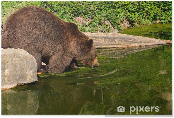 Plakat Europejski Niedźwiedź Brunatny W Parku Narodowym Szwajcaria