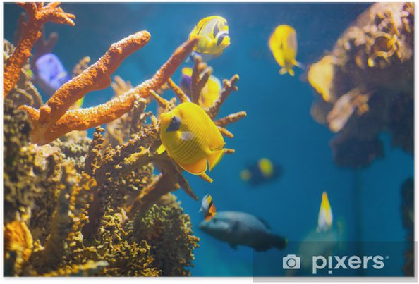 Plakát Exotické ryby na korálových útesů - Vodní a mořský život